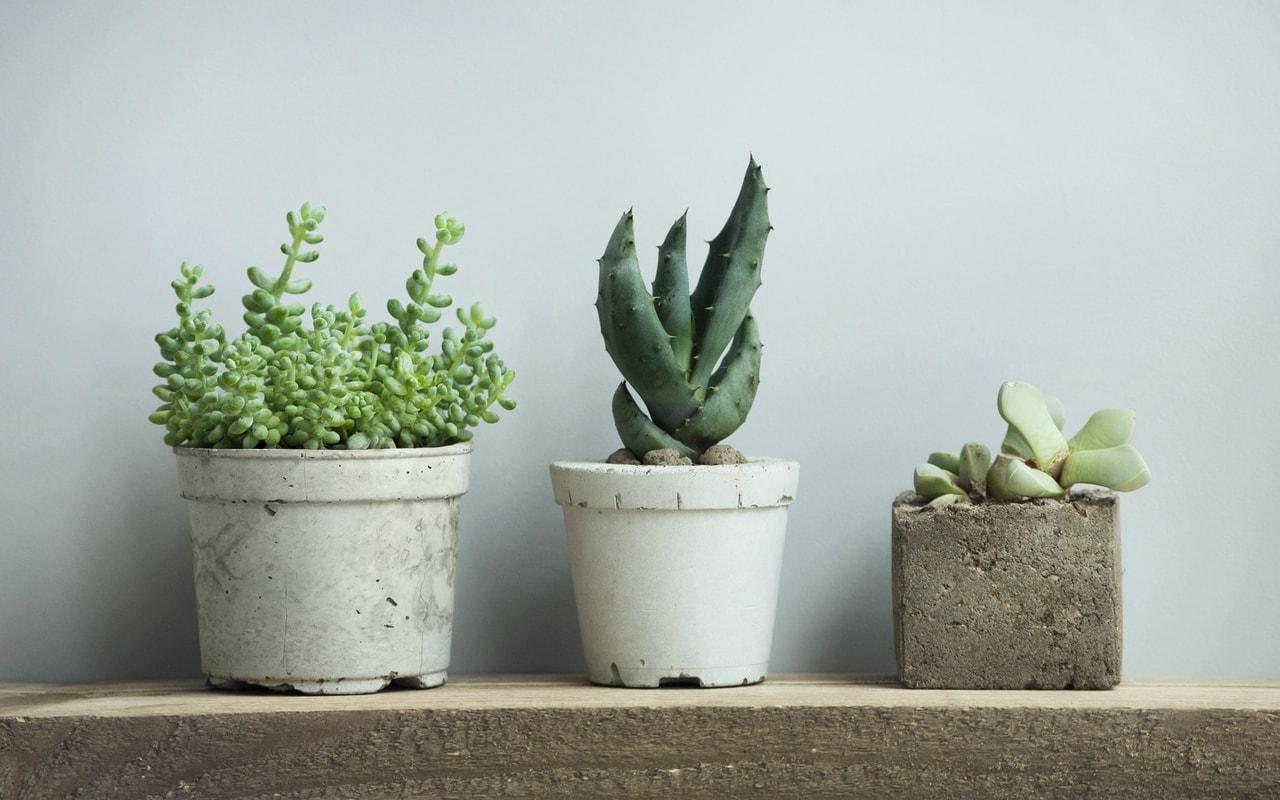 3-plantes-min