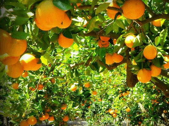 arbres fruitiers-min