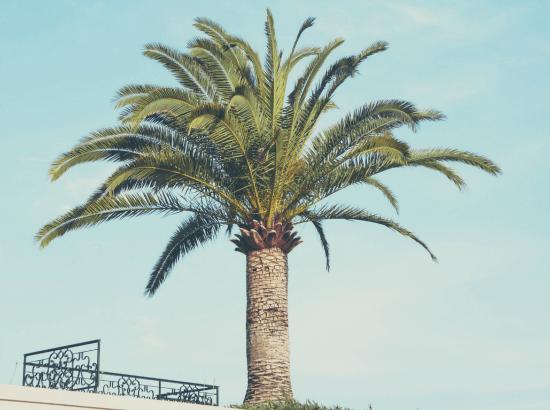 palmiers-min