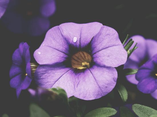 plantes saison-min